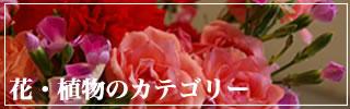 花・植物の写真