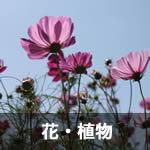 花・植物の無料画像写真