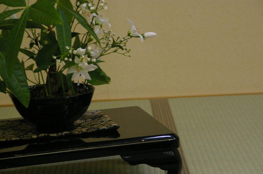 和室と盆栽