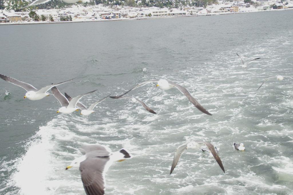 冬の海岸を背に飛ぶウミネコの群れ