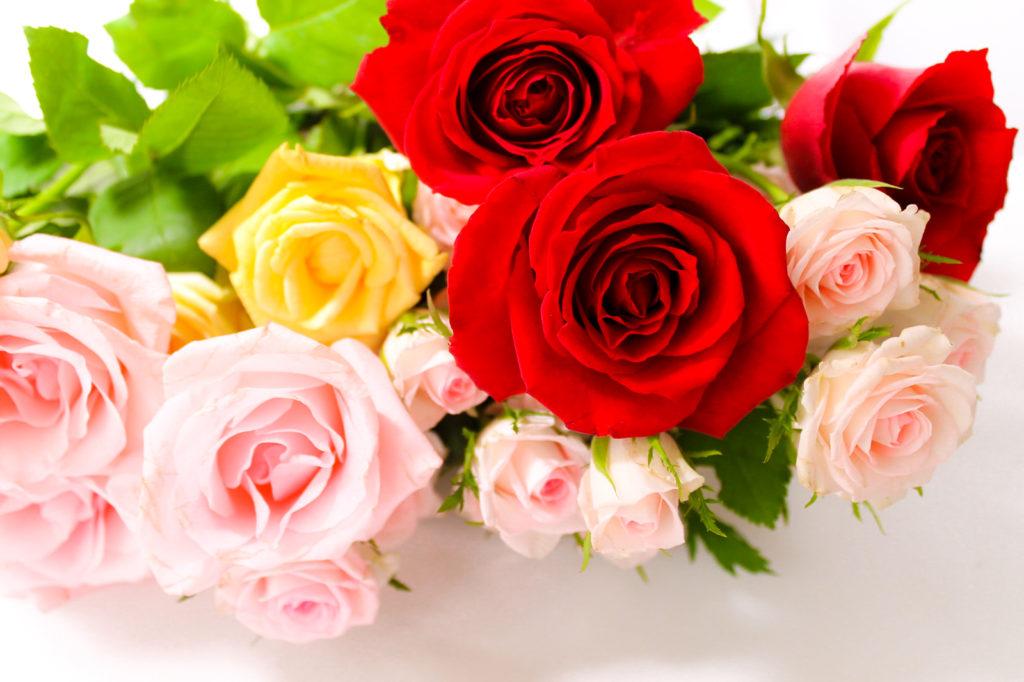 薔薇 バラ の花束と花言葉 無料画像 フリー写真素材 Activephotostyle