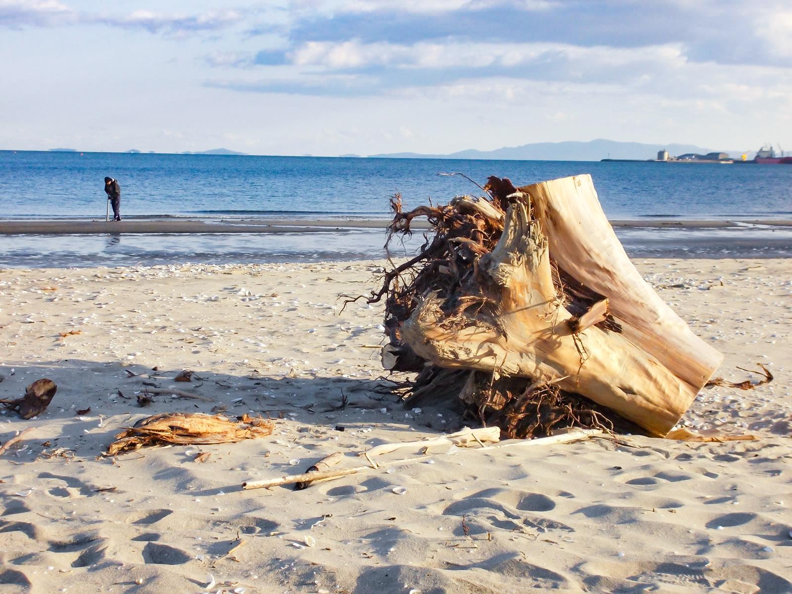 流木と波打ち際を歩く人の写真