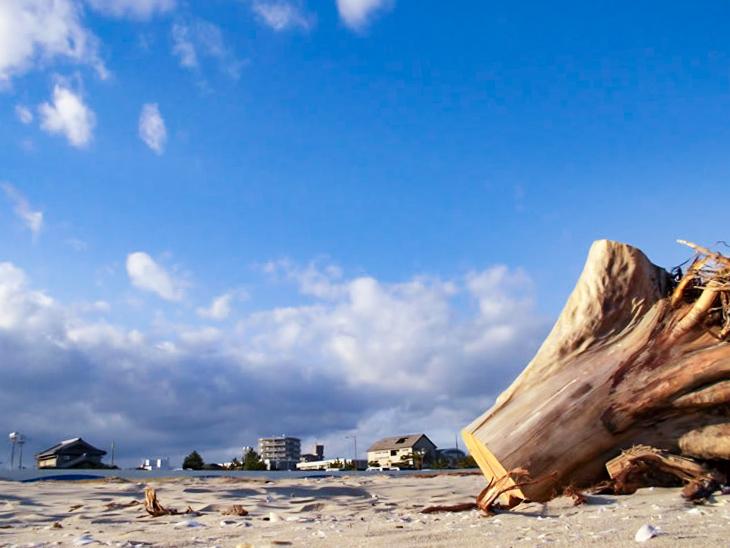 砂浜の流木