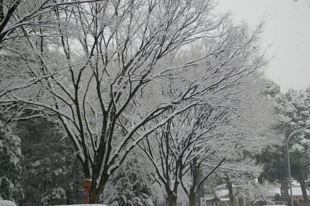 木の枝に降り積もった雪