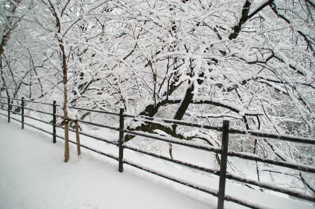 街路樹と歩道の手すりに積もる雪