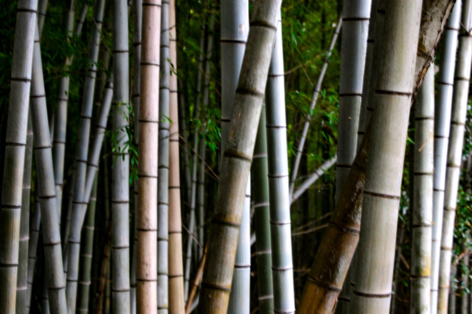 隙間なく生える竹