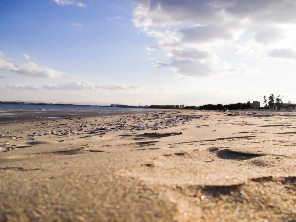 枝や貝殻が散乱する雨上がりの砂浜