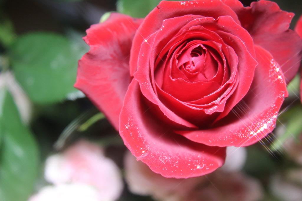 キラキラ光る薔薇3