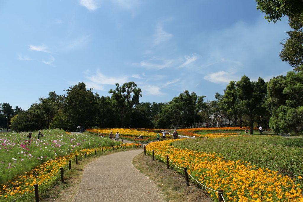 コスモス畑の花壇と秋の空
