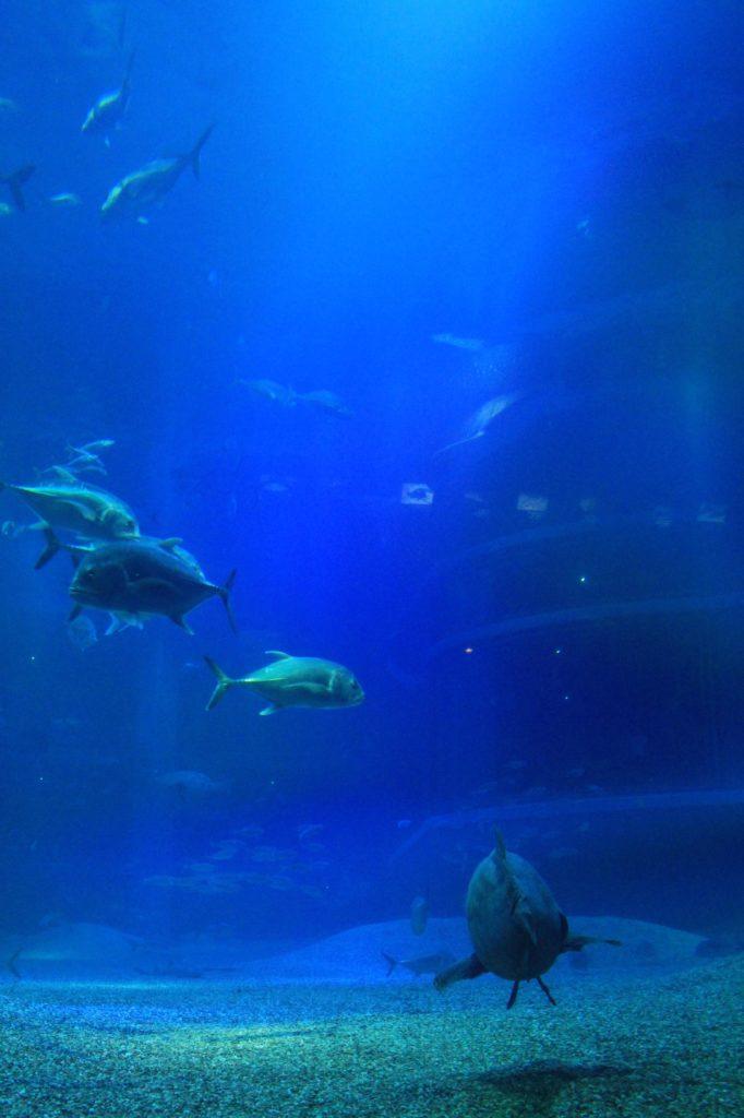 いろんな魚たち