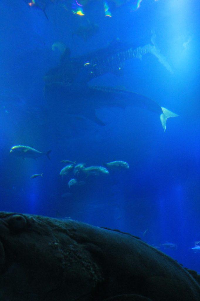 鮫の下で泳ぐ魚たち