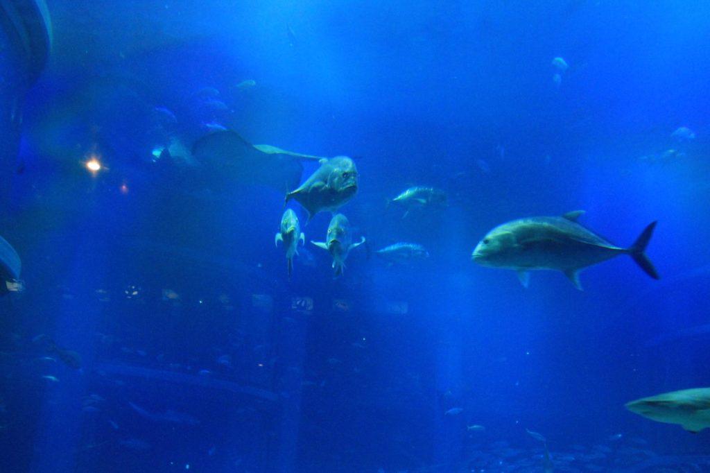 鮫(サメ)の他いろんな魚たち
