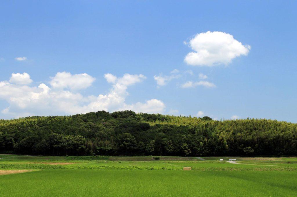ハート型の雲と稲の絨毯(じゅうたん)