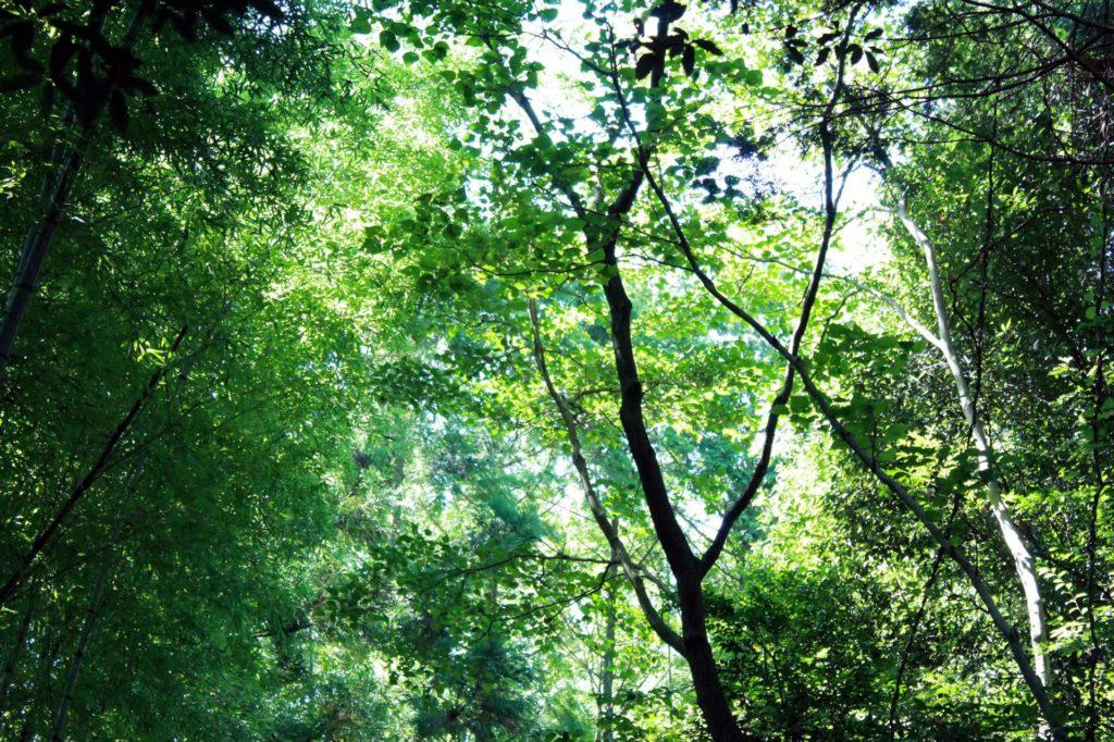 木漏れ日(木洩れ日)