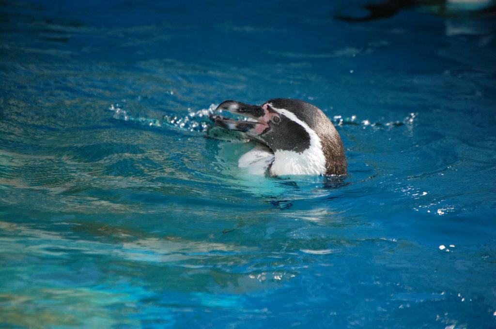 ペンギン「ああ気持ちいい!」