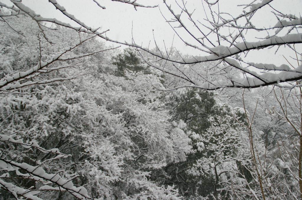 森の木々を真っ白に染めた雪