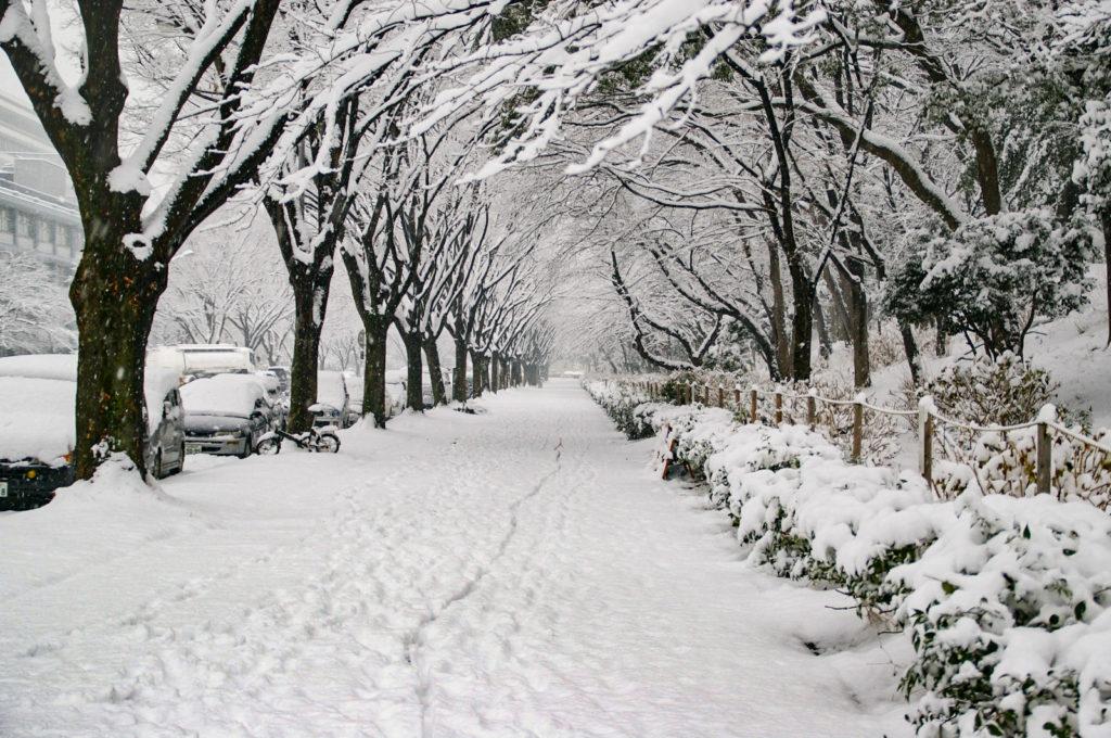 雪景色 4枚目