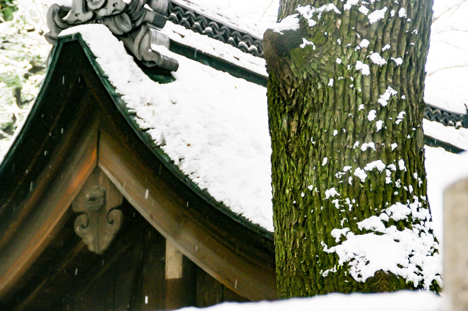 木の幹と屋根に降る雪