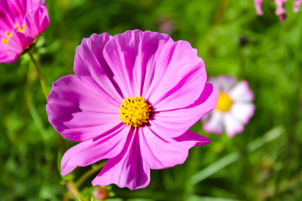 紫の花びらと黄色の花粉