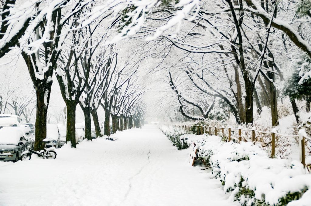 雪についた自転車の跡が後の雪で消える