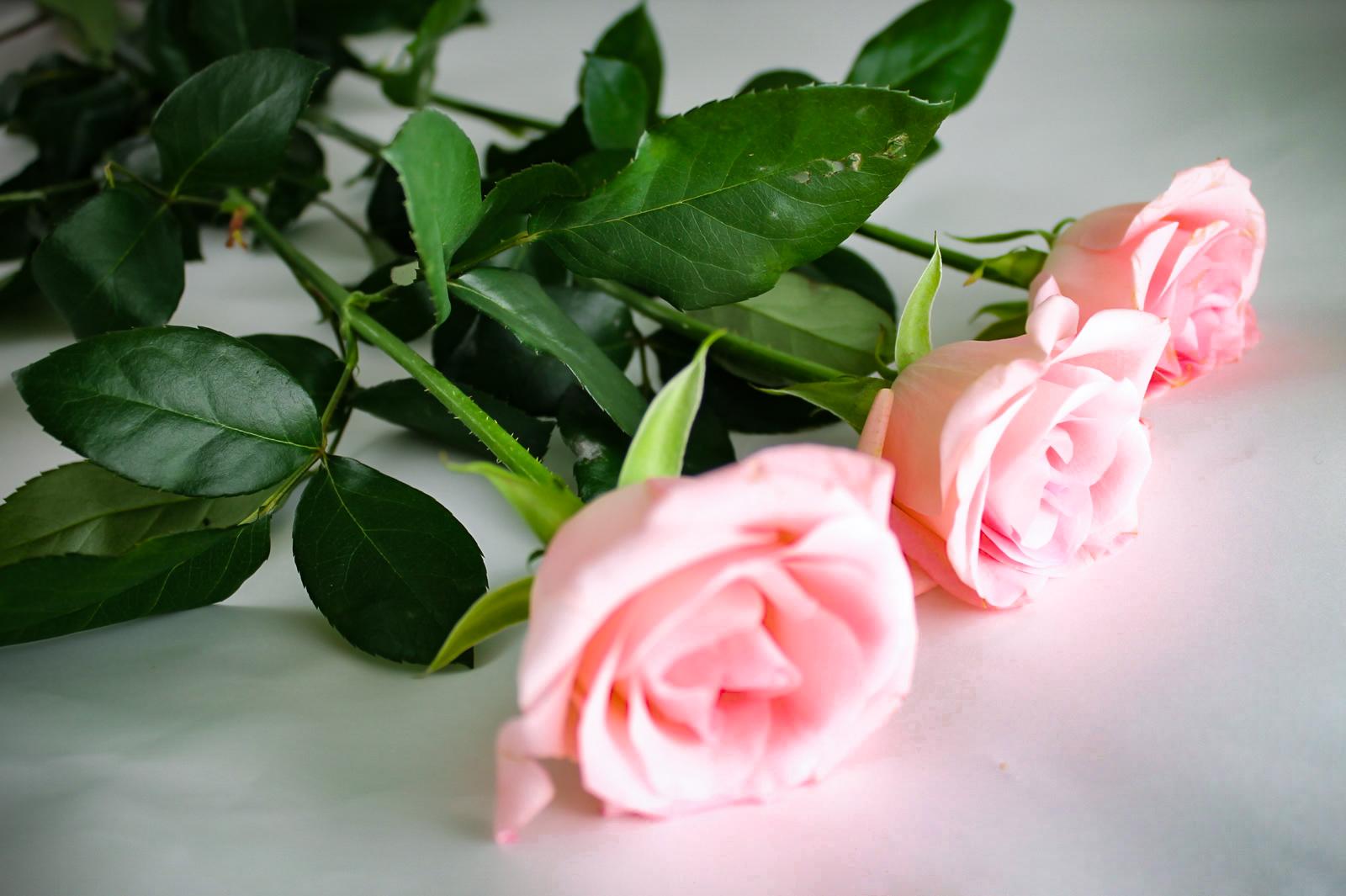花束としてピンクの薔薇3本を包装するところ