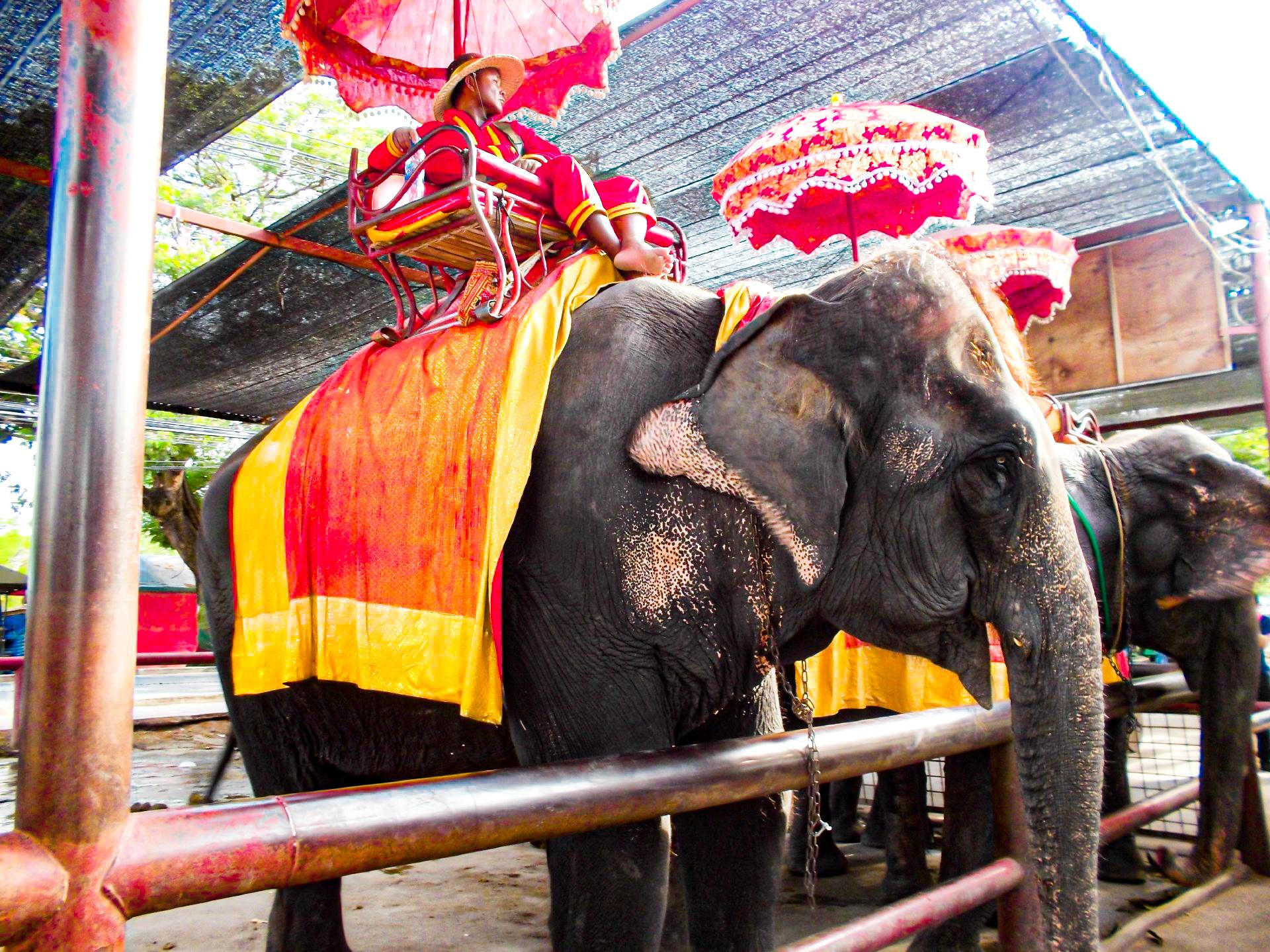 客を待つ象のタクシー