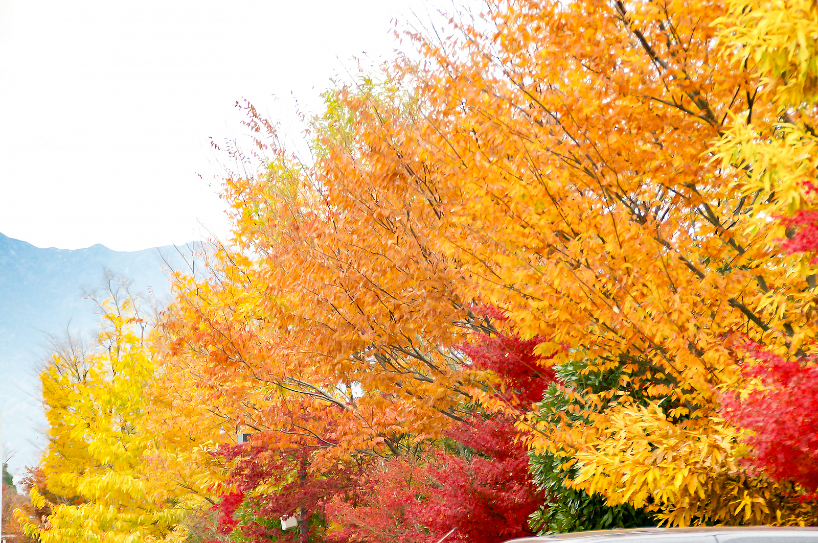 紅葉、銀杏が綺麗に並ぶ
