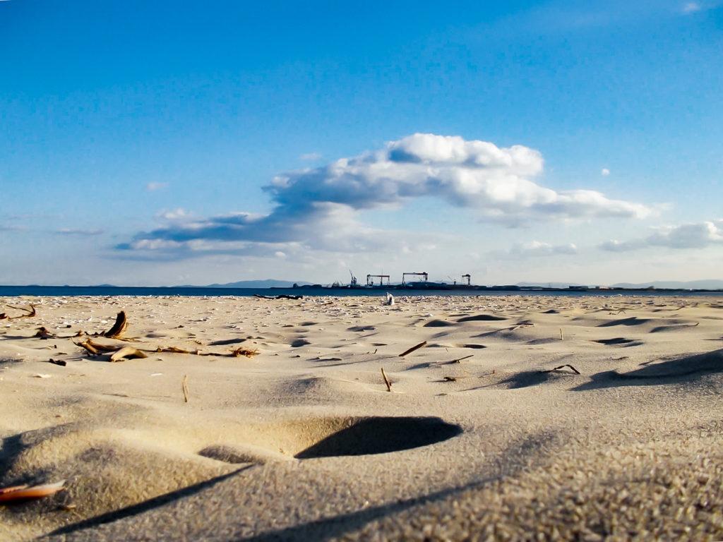 枝や貝殻が散乱する砂浜