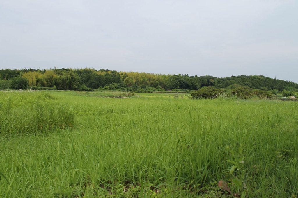 雑草の生い茂る土地