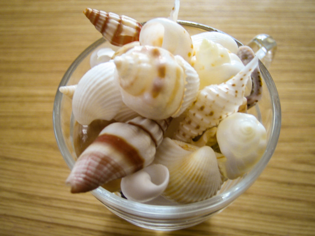 海で散歩中に拾った貝殻