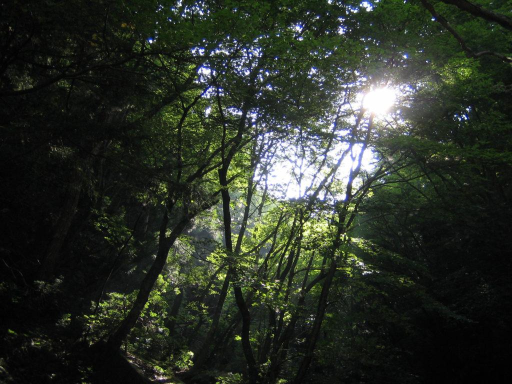 暗い森に差し込む木漏れ日の日差し