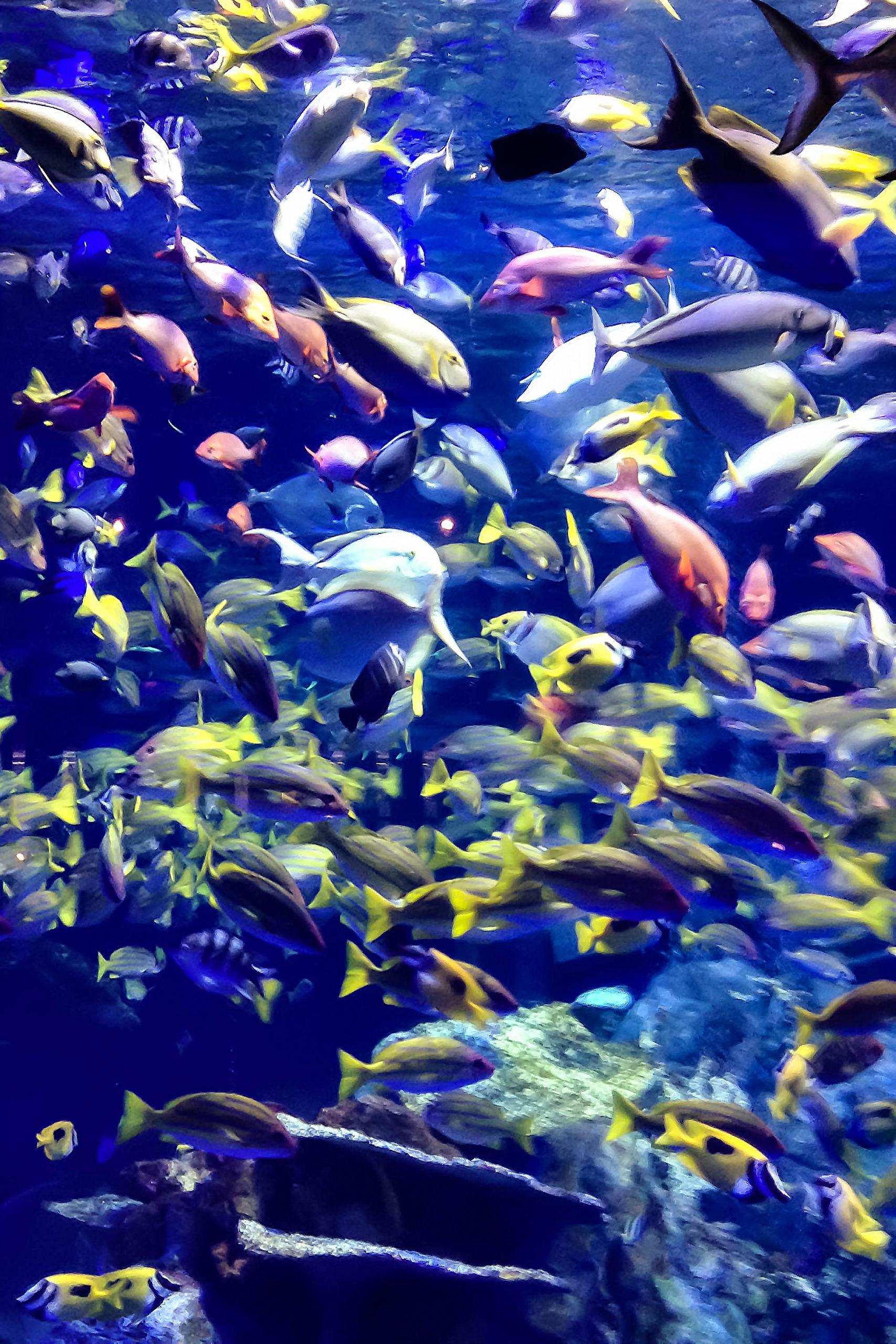 熱帯魚の大群の写真