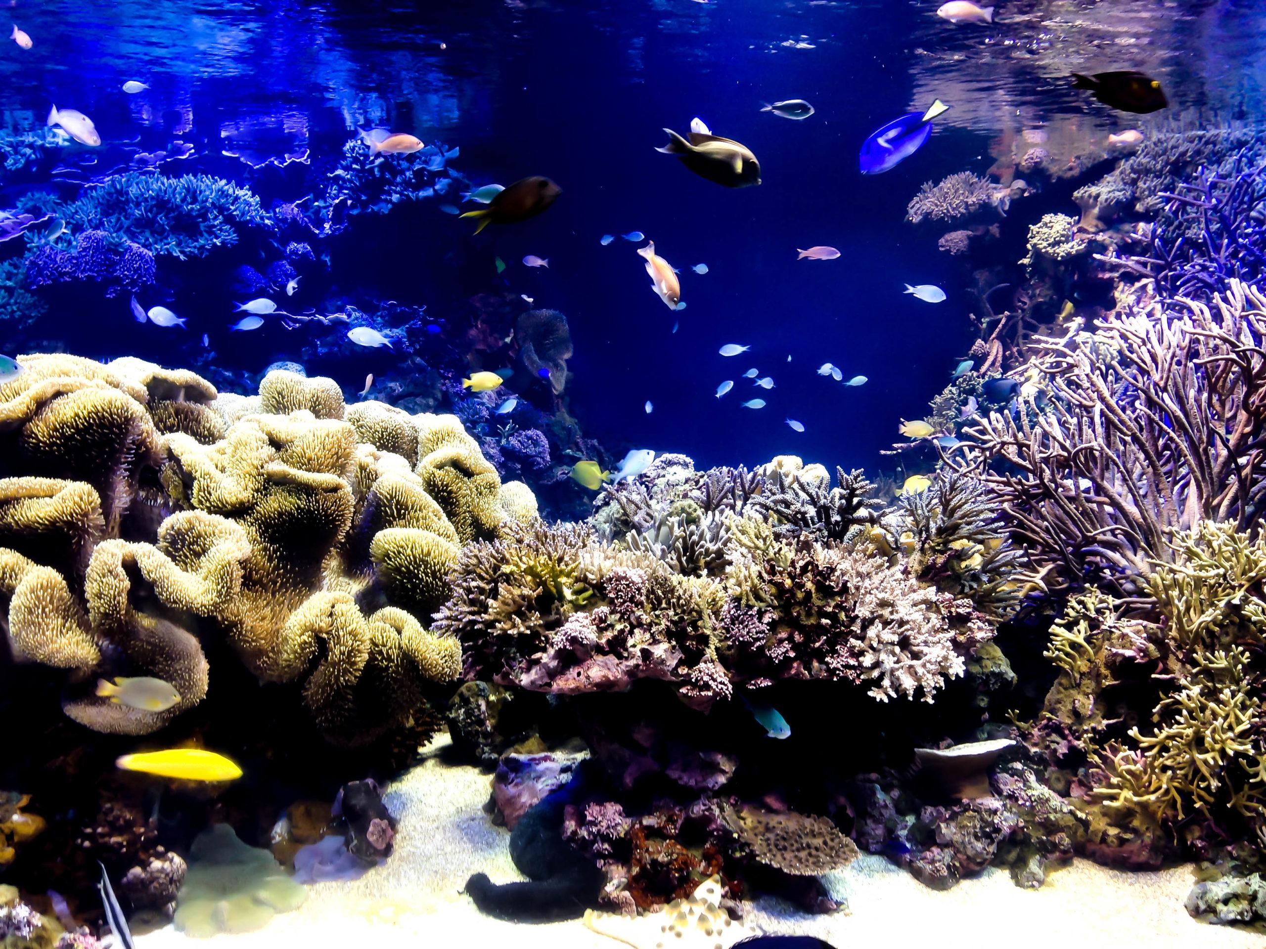 綺麗なサンゴと熱帯魚の写真