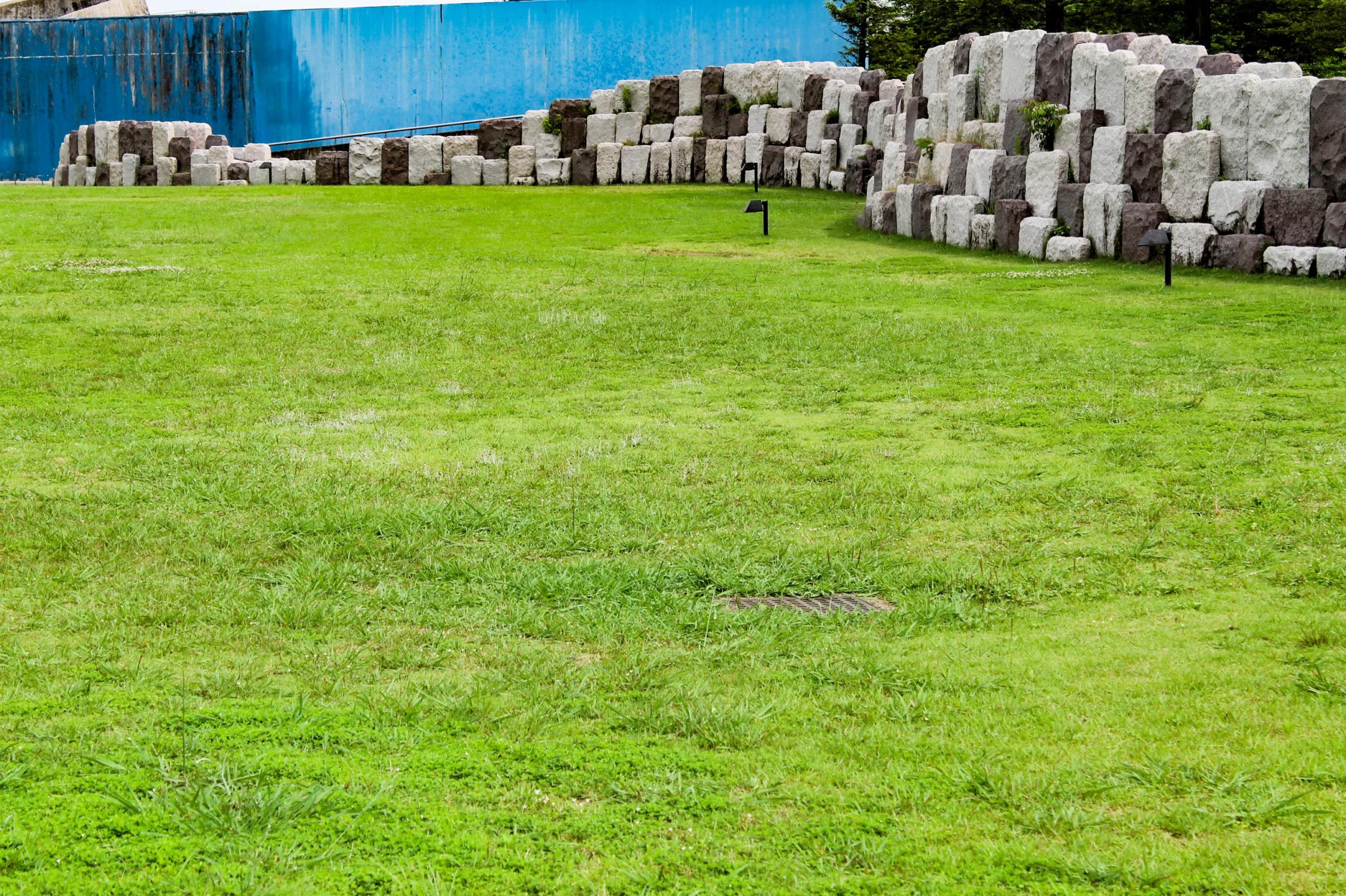 春の公園の芝の写真