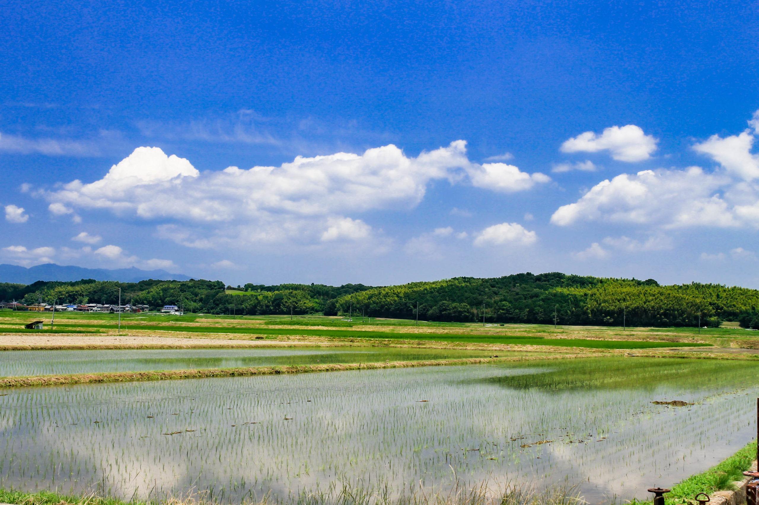 水田に映る青空の写真